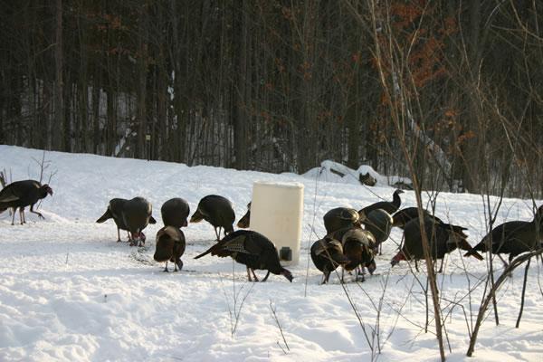 Turkey Feeding Program